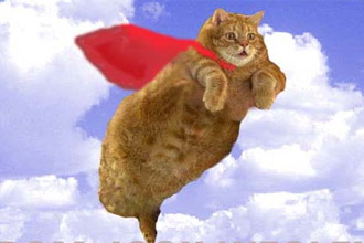 flying_cats_330.jpg